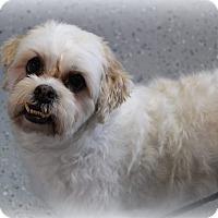 Adopt A Pet :: Brantley Turner - Urbana, OH