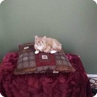 Adopt A Pet :: Bruiser - McHenry, IL
