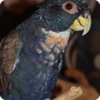 Adopt A Pet :: Ranger - Woodbridge, NJ