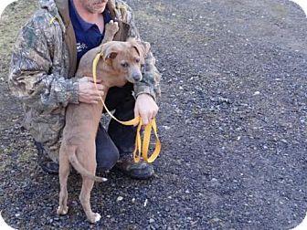 Labrador Retriever Mix Puppy for adoption in Marble, North Carolina - Skylar