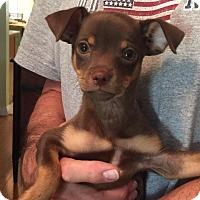 Adopt A Pet :: Rolo - Scottsdale, AZ