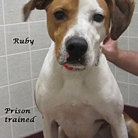 Hound (Unknown Type) Mix Dog for adoption in Bartonsville, Pennsylvania - Ruby
