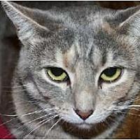 Adopt A Pet :: Maia - Jenkintown, PA