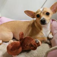 Adopt A Pet :: Angie (Cocoa Center) - Cocoa, FL