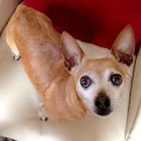 Adopt A Pet :: Lenny - San Francisco, CA