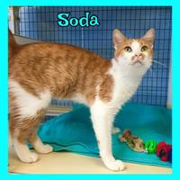 Adopt A Pet :: Soda - Jasper, IN