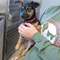 Adopt A Pet :: Kye - Indiana, PA