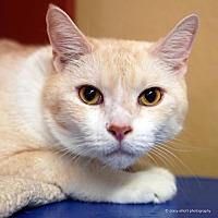 Adopt A Pet :: Kalamazoo - Tucson, AZ