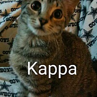 Adopt A Pet :: Kappa - Middletown, OH