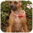 Photo 3 - Staffordshire Bull Terrier Dog for adoption in Long Beach, California - Molly