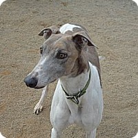 Adopt A Pet :: Sunny - Roanoke, VA