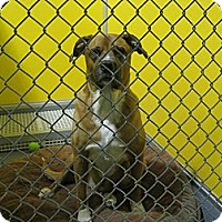 Adopt A Pet :: Knute - Phoenix, AZ