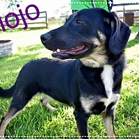 Adopt A Pet :: MOJO - Beaumont, TX
