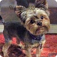 Adopt A Pet :: Mia - Lancaster, TX