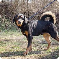 Adopt A Pet :: Lenny - Bristol, TN