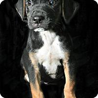 Adopt A Pet :: Jayson - Lufkin, TX