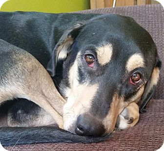 Hound (Unknown Type) Mix Dog for adoption in Rochester, Minnesota - Pearl