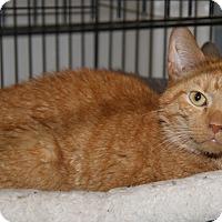 Adopt A Pet :: Bobby (Neutered) - Marietta, OH