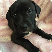 Adopt A Pet :: Jill - Southbury, CT