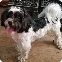 Adopt A Pet :: Chewy - Detroit, MI