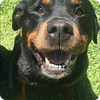 Adopt A Pet :: Venus - Sonoma, CA