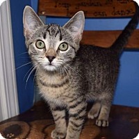 Adopt A Pet :: Manhattan - LaGrange, KY
