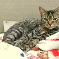 Adopt A Pet :: Ivy - Kinston, NC