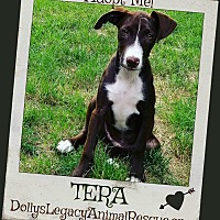 Adopt A Pet :: TERA - Lincoln, NE