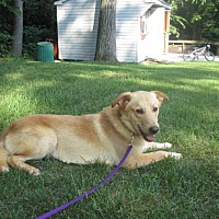 Adopt A Pet :: JANGO - West Milford, NJ