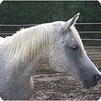Adopt A Pet :: Willow - Lyles, TN