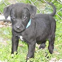 Adopt A Pet :: Watson - Jarrettsville, MD