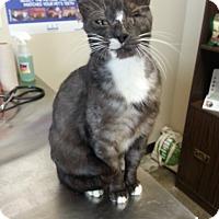 Adopt A Pet :: Ash - San Antonio, TX