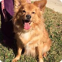 Adopt A Pet :: Rover - San Antonio, TX