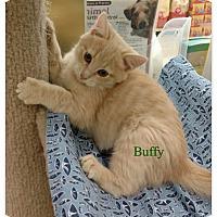 Adopt A Pet :: Buffy - Warren, OH