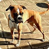 Adopt A Pet :: Belvedere - Reno, NV