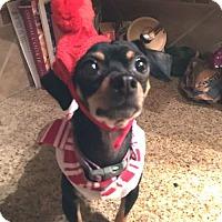 Adopt A Pet :: Skeeter - Englewood, CO