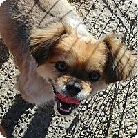Adopt A Pet :: Kimmi - Ogden, UT