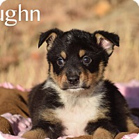 Adopt A Pet :: Vaughn - Rosamond, CA