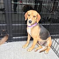 Adopt A Pet :: Joyce - Greensboro, GA
