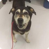 Adopt A Pet :: Rosebud - Mt. Gilead, OH