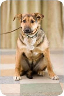 German Shepherd Dog Mix Dog for adoption in Portland, Oregon - Bibi