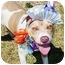 Photo 1 - Pit Bull Terrier Dog for adoption in Huntington, New York - Timothy