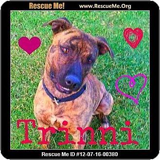 Plott Hound Mix Dog for adoption in Scottsdale, Arizona - Trinni