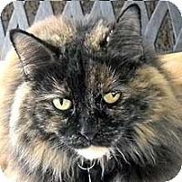 Adopt A Pet :: Shalimar - Phoenix, AZ