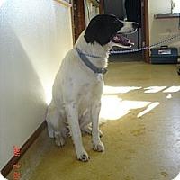 Adopt A Pet :: Sydney - Stilwell, OK