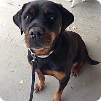 Adopt A Pet :: Jana - Rochester/Buffalo, NY