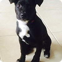 Adopt A Pet :: Cassi - Miami, FL