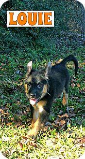 German Shepherd Dog Mix Puppy for adoption in Ft. Atkinson, Wisconsin - Louie