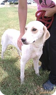 Retriever (Unknown Type)/Coonhound Mix Dog for adoption in Dover, Tennessee - Jazz