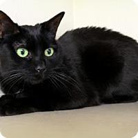 Adopt A Pet :: Naamah - Bellevue, WA